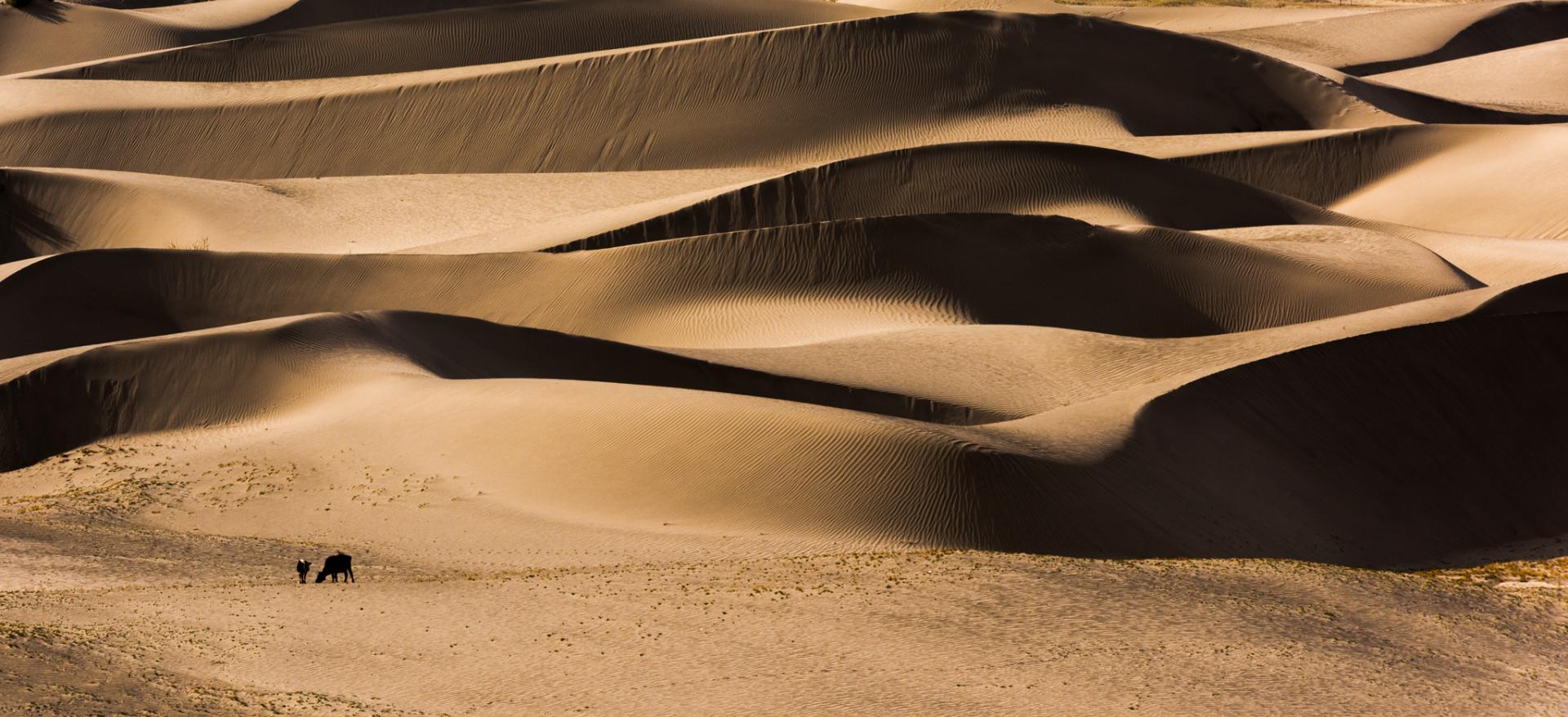 Sand Dunes Hunder