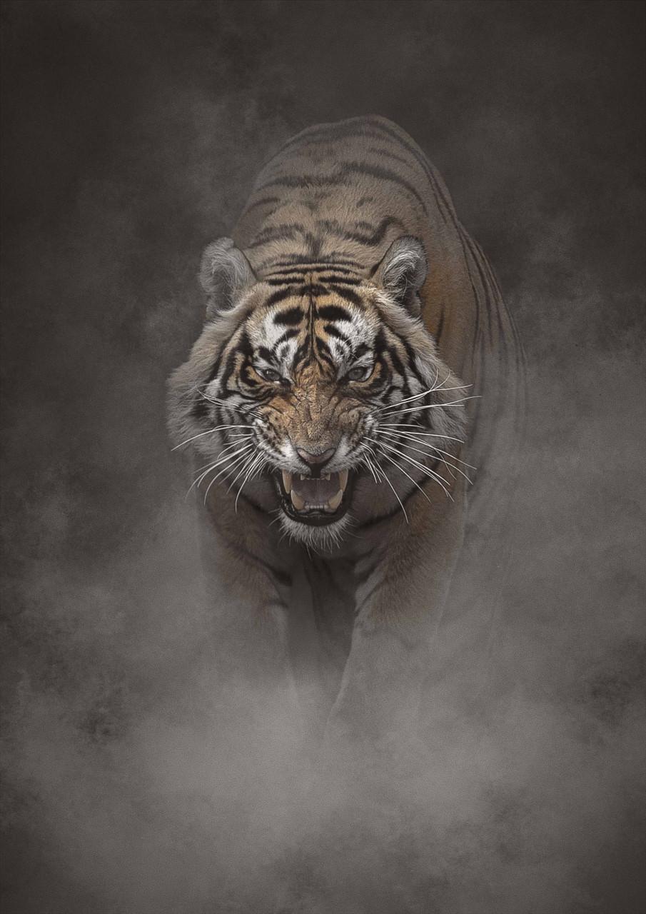 Snarling Tiger