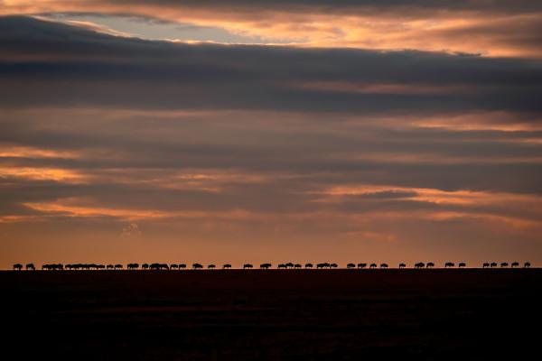Migration at horizon