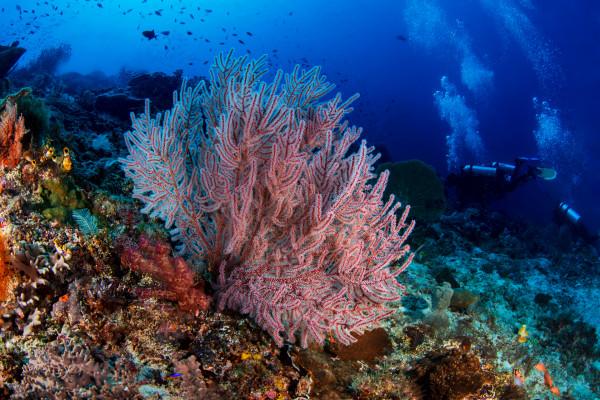 Soft Coral Seascape